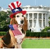 Obama To Choose Portuguese Water Dog Or Labradoodle